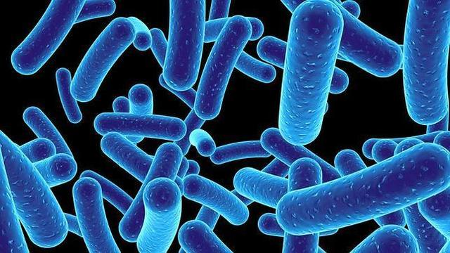 Trasplante de genoma