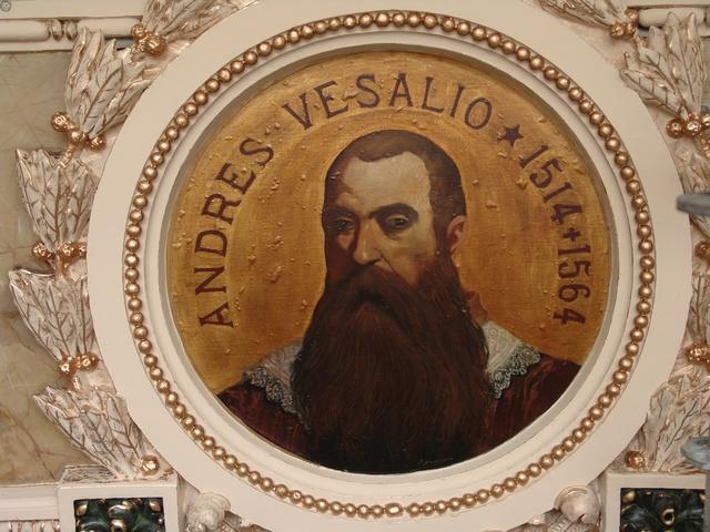 ANDRES VESALIOS ( 1514 - 1564)