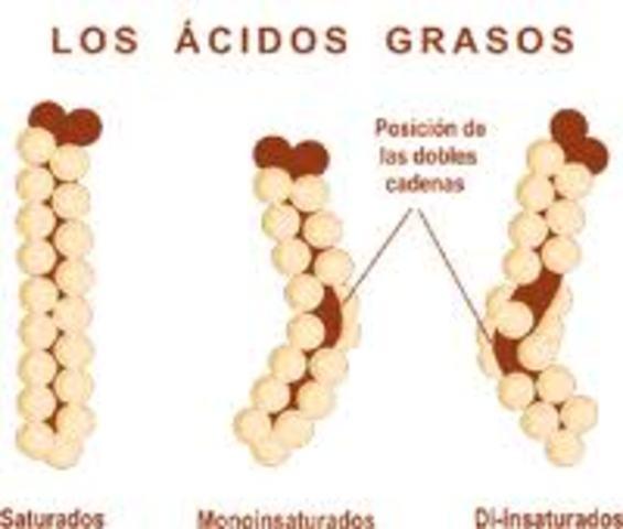 Descubrimiento de ácidos grasos