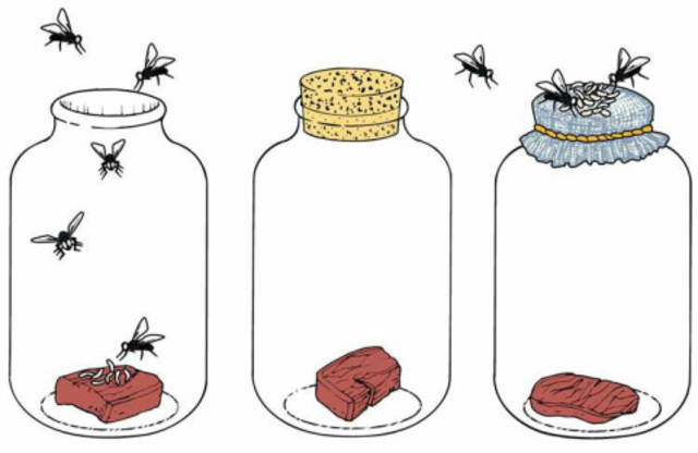 Theory of the generation of insects