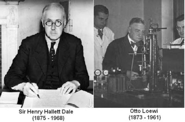 Henry Hallett Dale y Otto Loewi.