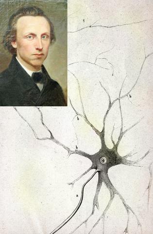 Otto Friedrich Karl Deiters (The Journal of Comparative neurology -2013-)