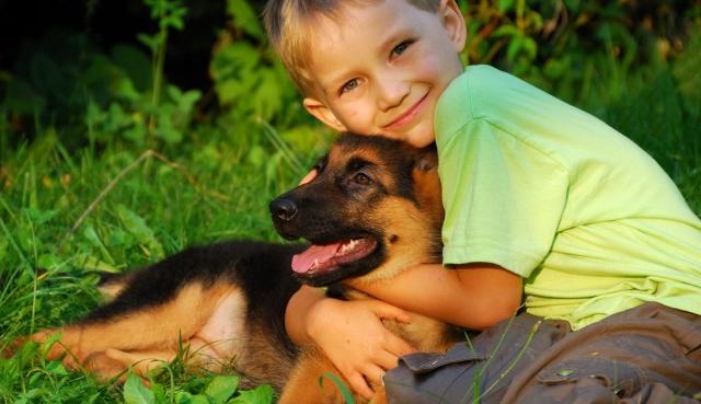 Reglamento para el Control y protección de animales Domésticos en el municipio de Campeche