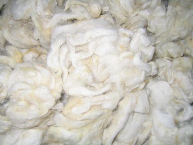 Wool Export Begins