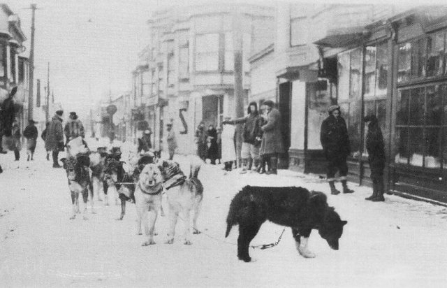 DIPHTHERIA DOGS REACH NOME (#4)