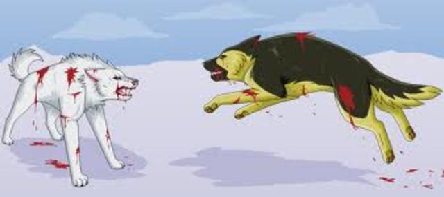 Buck killing Spitz