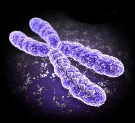 Se secuencia el primer cromosoma humano completo: el número 22