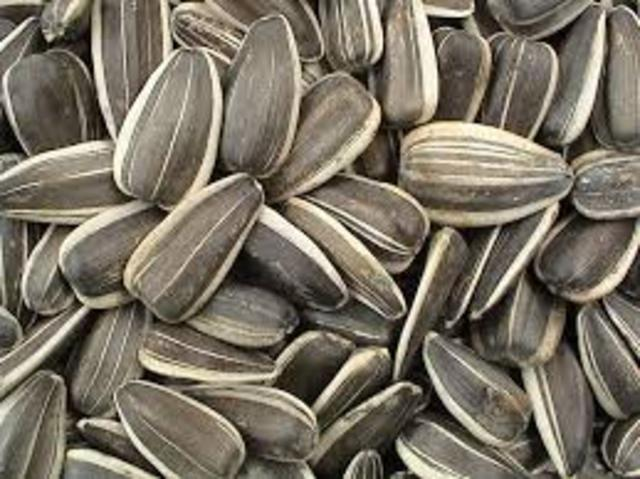 The Sunflower Seeds Incident