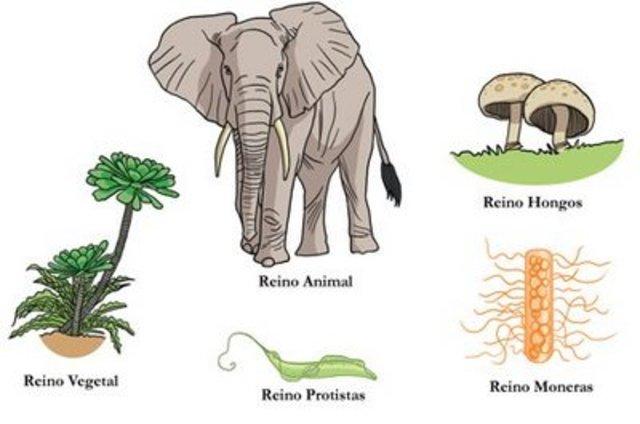 Clasificacion de los seres vivos en 5 reinos