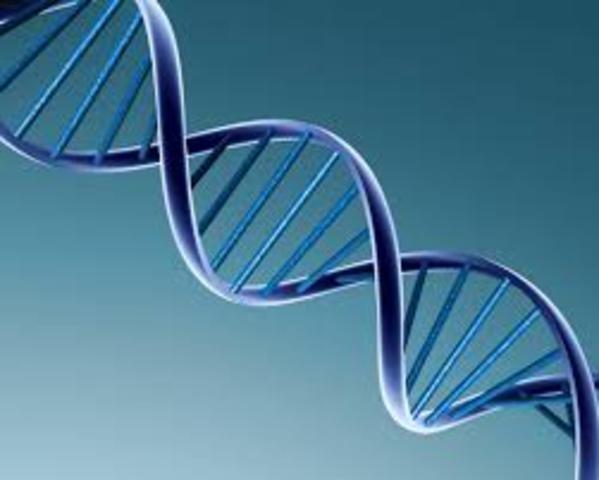 ESTRUCTURA DEL ADN
