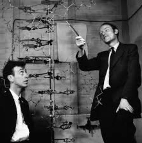 Watson y Crick.