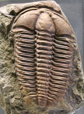 Primeros animales marinos pluricelulares carentes de esqueleto.