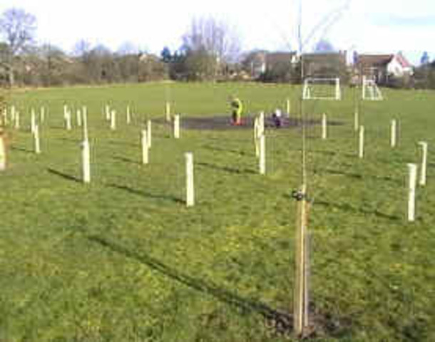 Planting of the Grove