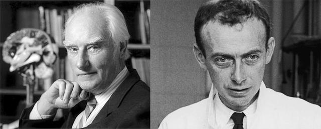 1953 Francis Crick y James Watson, publican la estructura del DNA.