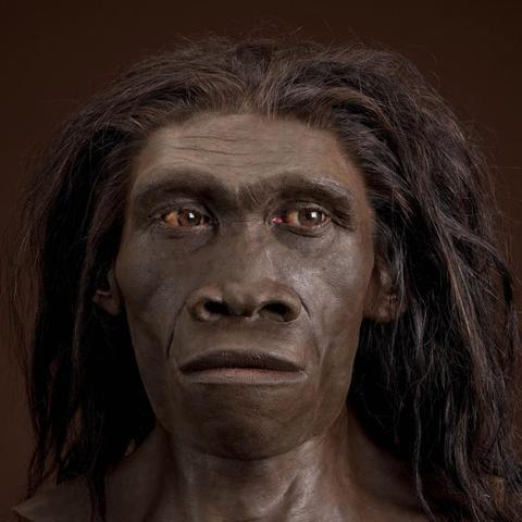 Homo erectus (hace 1900000-400000 años)