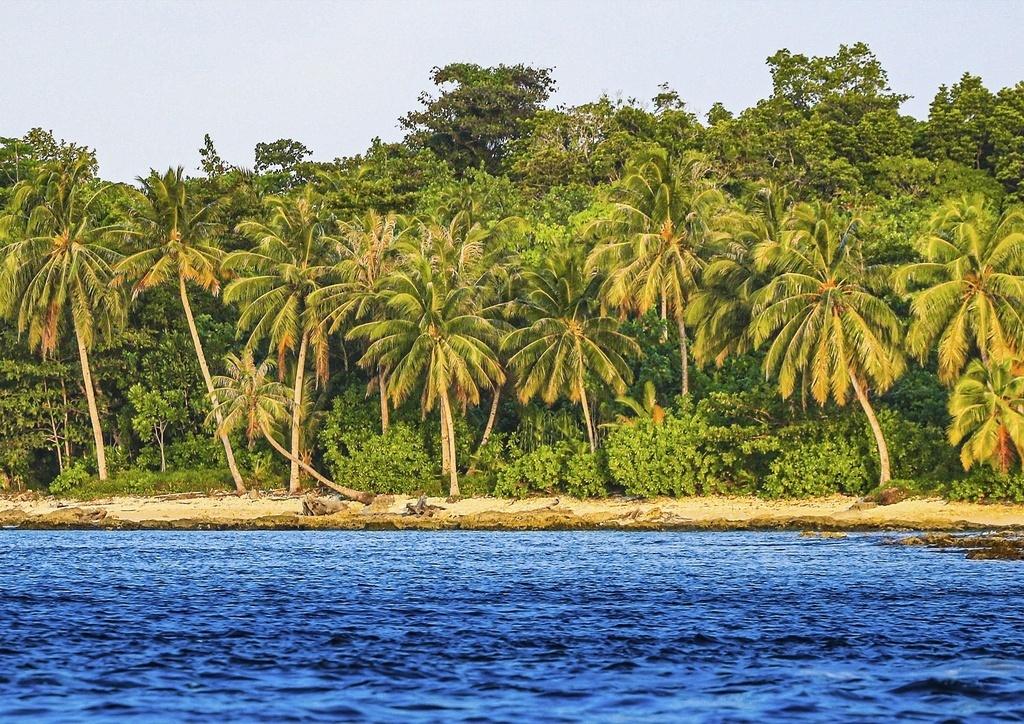 Quadro Coqueiros e Mar em Mentawai