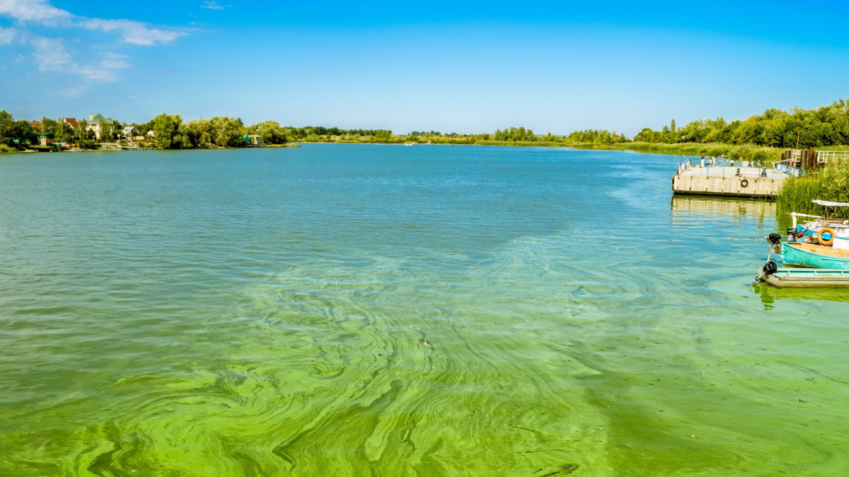 Toxic Algae Blooms on the Rise, Here's How They Look From Above