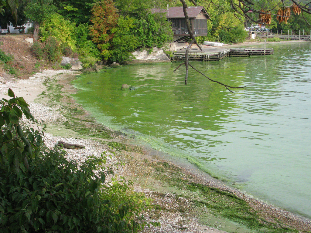 Unregulated thermal plumes can encourage poisonous algae growth and affect aquatic and terrestrial ecosystems.