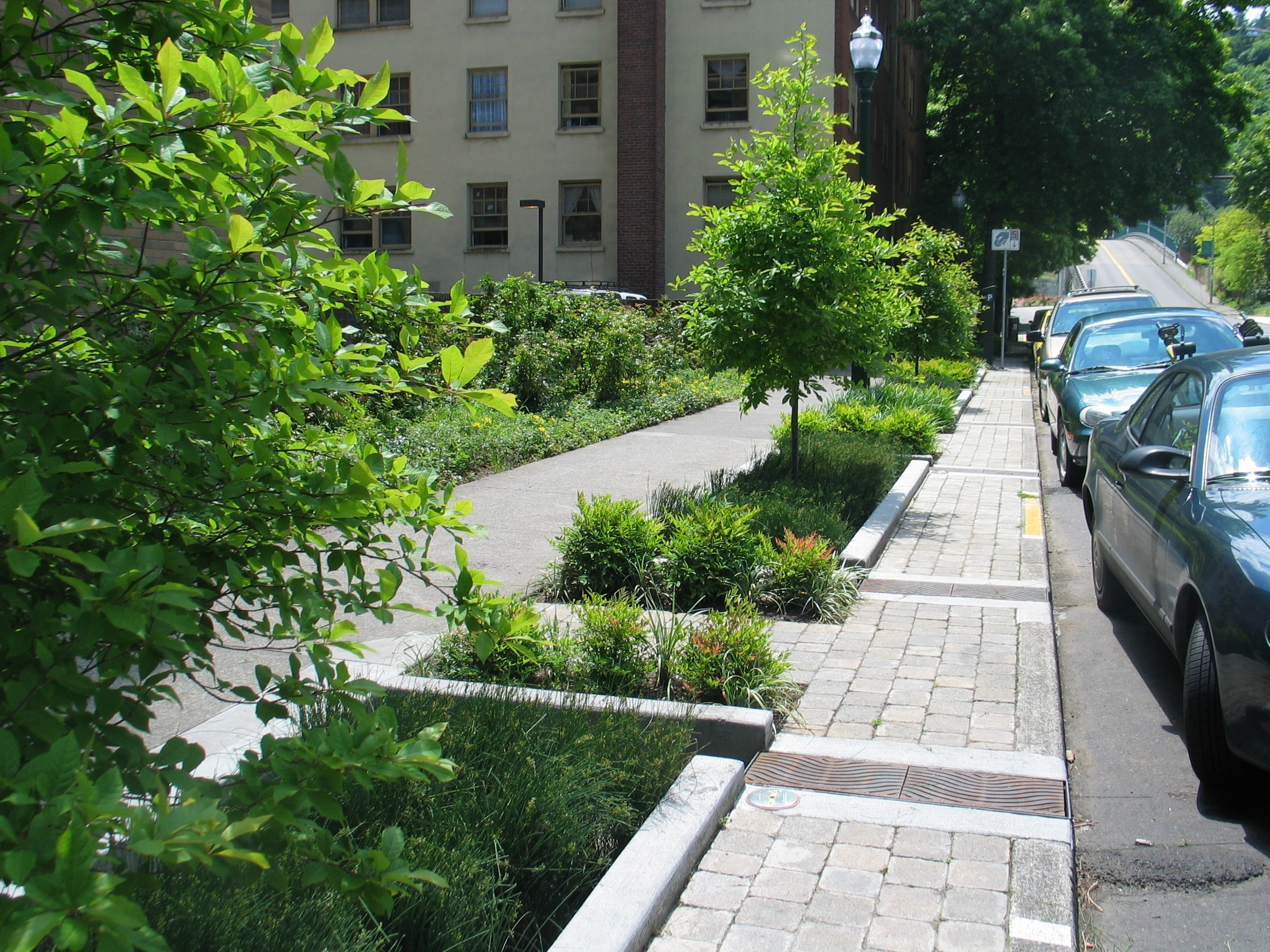 Street planters are used to absorb and hold storm water, keeping it from overrunning combined sewer systems.