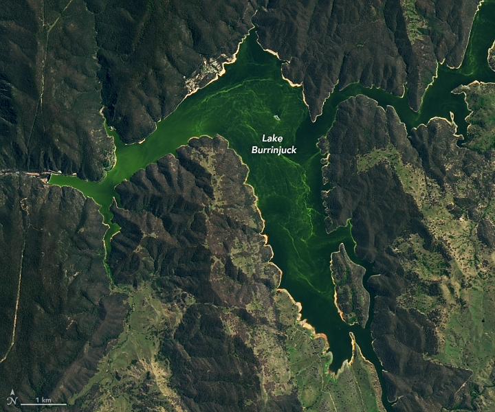 NASA Earth Observatory photo capturing algal bloom. (CREDIT: NASA, Feb10, 2021)