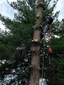 SiteLock Website Security Case Study: Vic's Tree Service