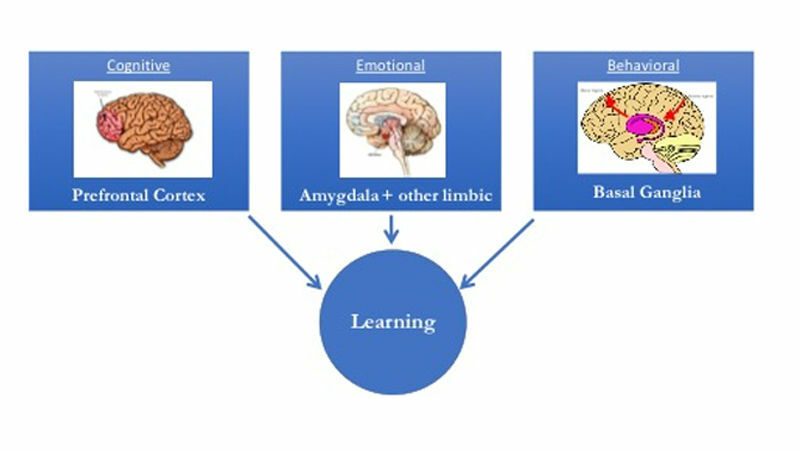 The neuroscience is clear in showing that the training medium needs to broadly engage multiple learning centers in the brain (like scenario-based video), and that training must be ongoing and spaced over time