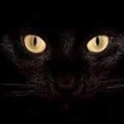 Black Cat Paddock
