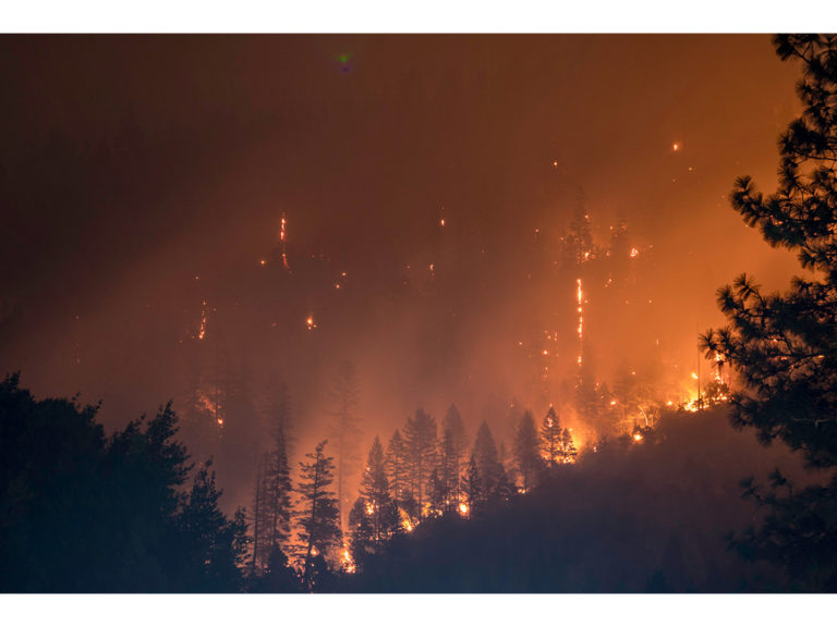 Forest Fire website