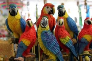 Rare Bird Inventory