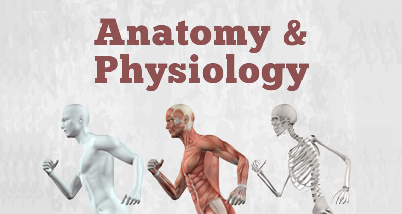 Anatomy and Physiology I [Udemy]