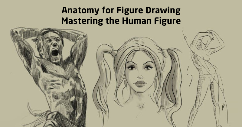 Anatomy for Figure Drawing: Mastering the Human Figure (Udemy)