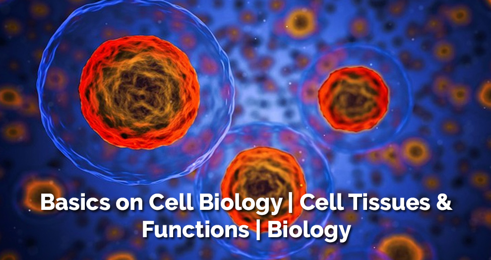 Basics on Cell Biology | Cell Tissues & Functions | Biology [Udemy]