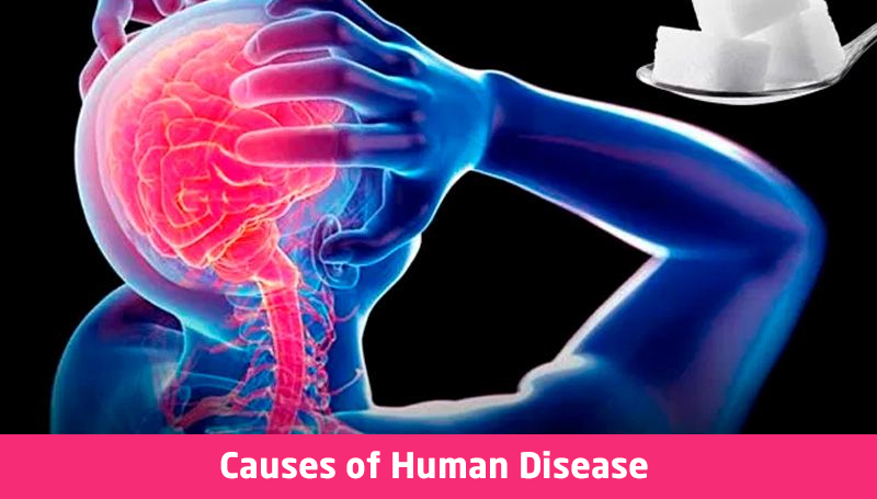 Causes of Human Disease By University of Leeds [Future Learn]