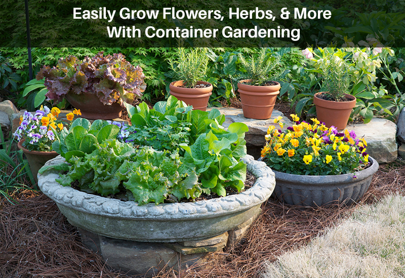 Easily Grow Flowers, Herbs, & More With Container Gardening [Udemy]