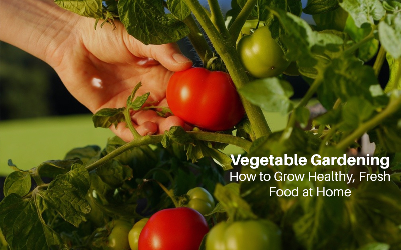 Vegetable Gardening: How to Grow Healthy, Fresh Food at Home [Udemy]