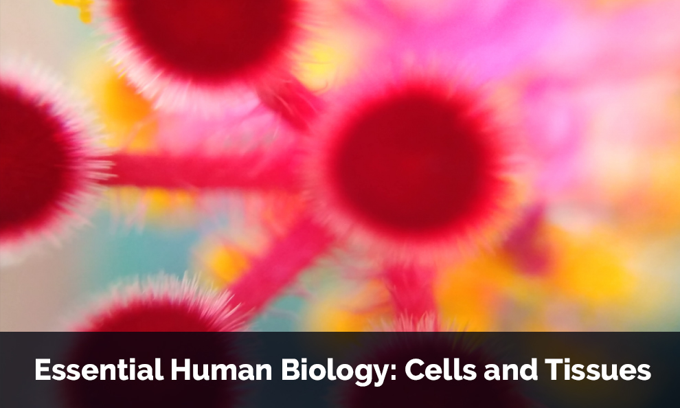 Essential Human Biology: Cells and Tissues - Offered By The University of Adelaide [edX]