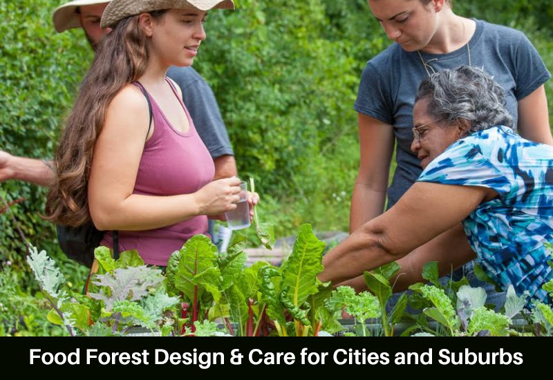 Food Forest Design & Care for Cities and Suburbs [Udemy]