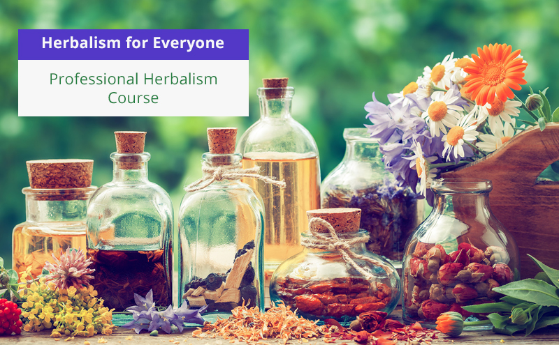 Herbalism for Everyone – Professional Herbalism Course [Udemy]
