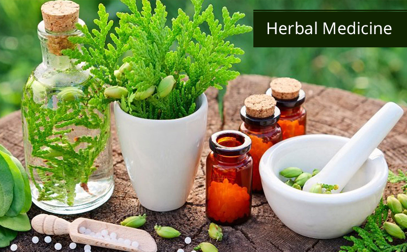 Herbal Medicine By University of Minnesota [Coursera]