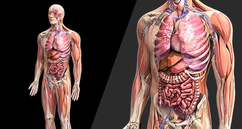 Human Anatomy [EdX]