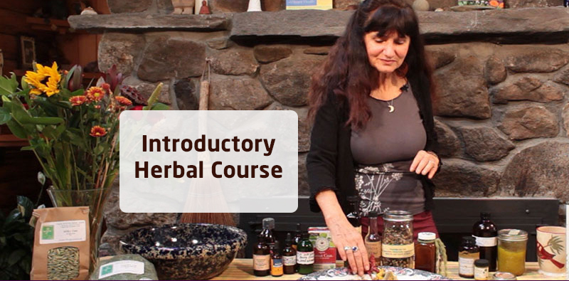Introductory Herbal Course [The Herbal Academy]