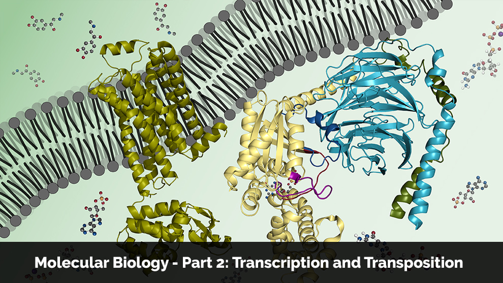 Molecular Biology - Part 2: Transcription and Transposition - Offered by  Massachusetts Institute of Technology [edX]