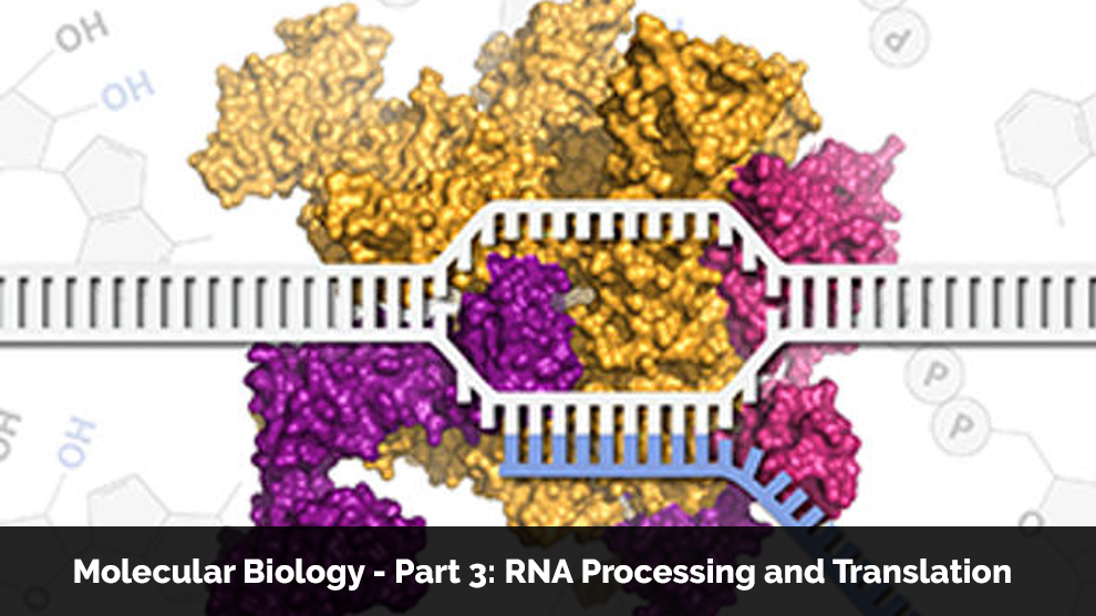 Molecular Biology - Part 3: RNA Processing and Translation - Offered by Massachusetts Institute of Technology [edX]