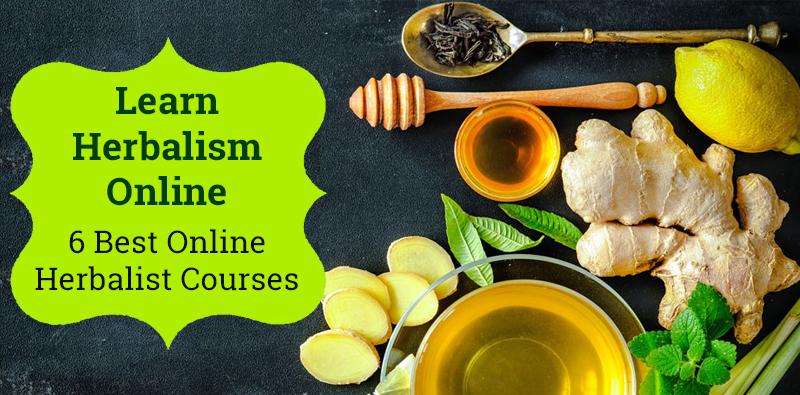 Best Online Herbalist Courses