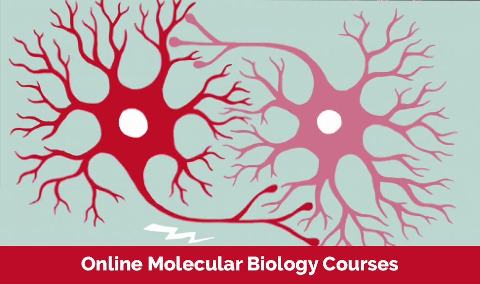 Online Molecular Biology Courses [Harvard University]