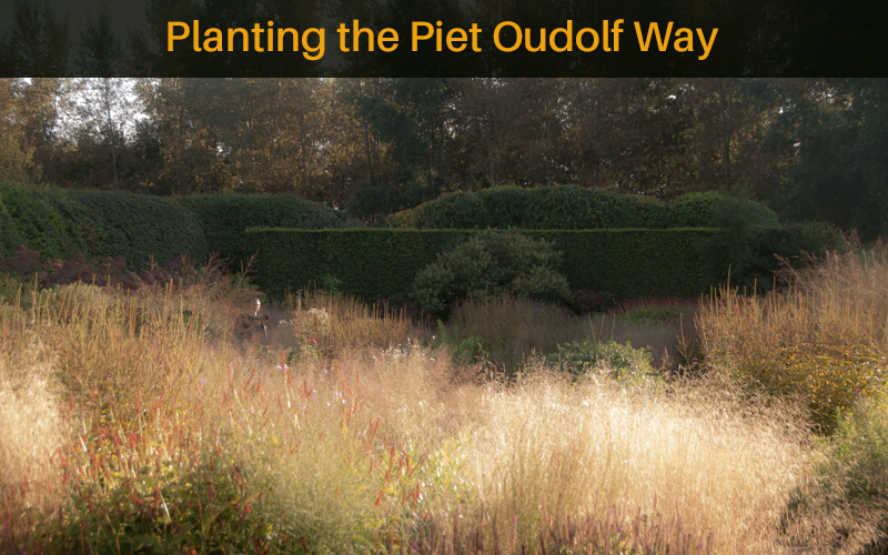 Planting the Piet Oudolf Way [Learning With Experts]