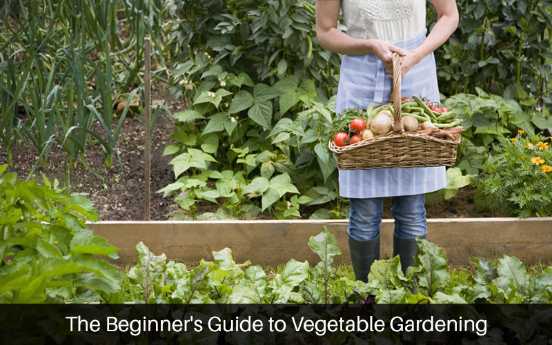 The Beginner's Guide to Vegetable Gardening [Udemy]