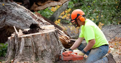 tree-services-glasgow