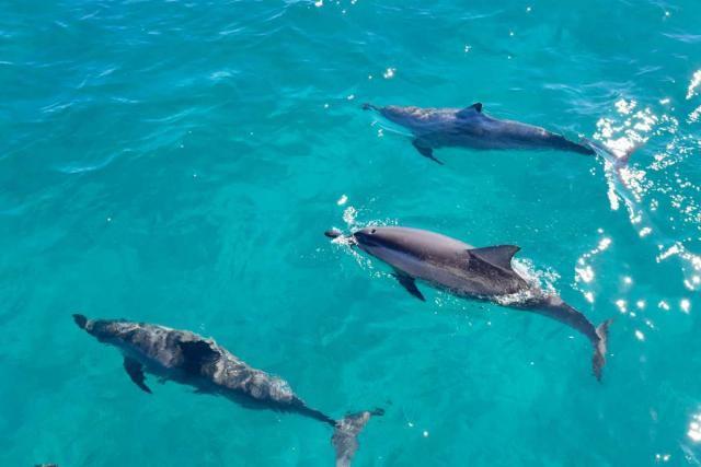 A pod of dolphins swims past teens in Hawaii on summer service program.