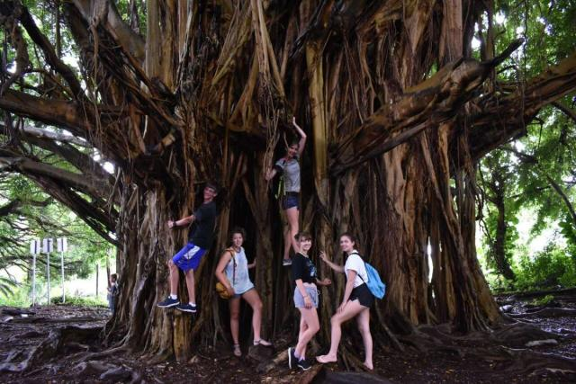 Teens climb a tree on their ultimate summer program in Hawaii.